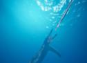 Grödner Fischsaurier