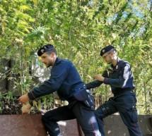Cannabis-Plantage in Kaltern