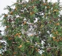Katze in Not